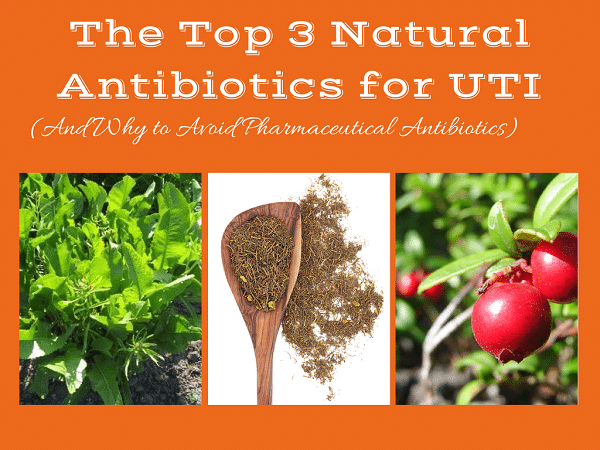 natural antibiotics for UTI